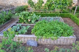 vegetable-garden-890625_1280
