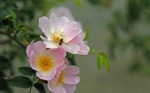 flower-682826_1280