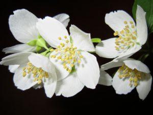 flower-363278_1280