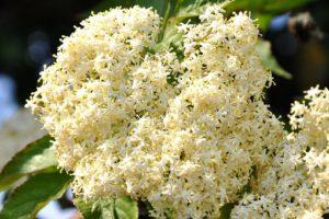 spring-1407575__340
